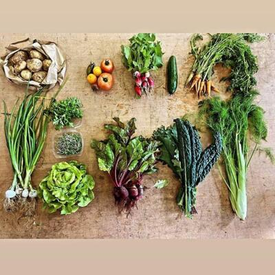 Summer CSA (20 Weeks) - Full Payment 5% Discount