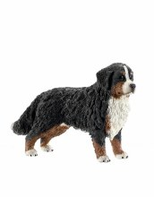 16397 SH BERNESE MOUNTAIN DOG