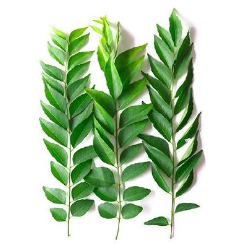Fresh Curry Leaves Packet