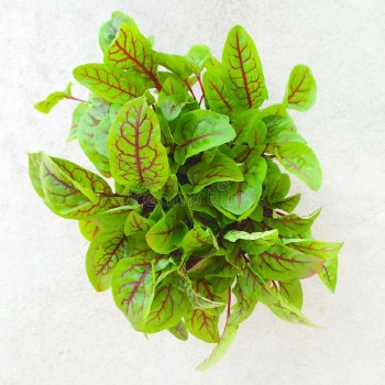 Fresh Red Amarnath Leaves