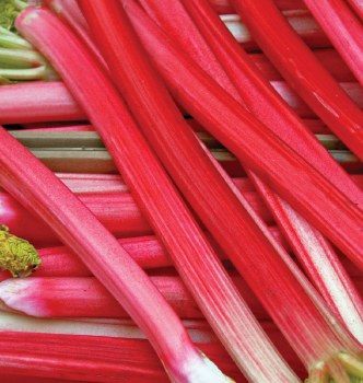 Rhubarb, Local - Lb