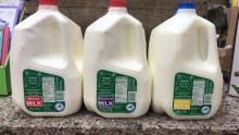 Milk, Hvf 2% - Gallon