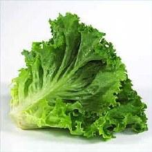 Lettuce Head, Green Leaf