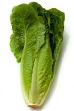 Lettuce Head, Romaine - Each