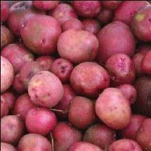 Potatoes, Red - Lb *new*