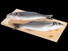 Whole European Sea Bass