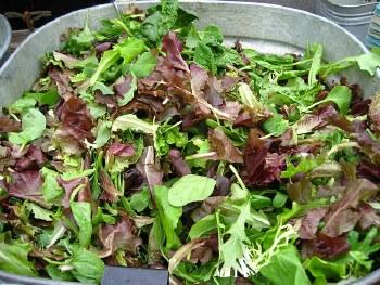 lettuce, MESCLUN/ crunchy MIX