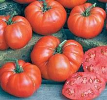 Tomatoes,  Beefsteak/OG
