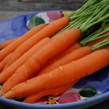 Carrot,OG