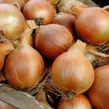 Onion ,Yellow  OG