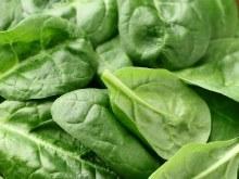 Spinach, OG