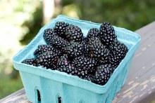 Blackberries ,OG