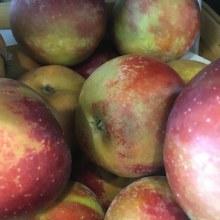 Apples, Arkansas Black
