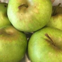 Apples, Mutsu
