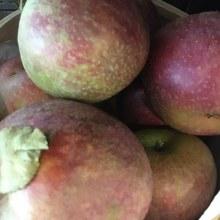 Apples, Stayman-Winesap