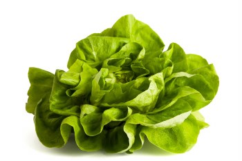Lettuce - Bibb