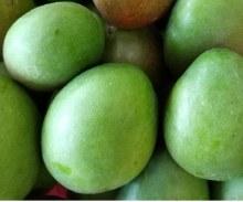 Mango Green PER LB