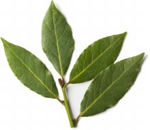 Bay Leaves Fresh EACH PACK