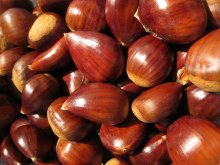 Chestnut LB