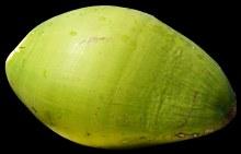 Coco Green EACH