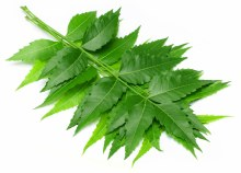Leaves Neem EACH PACK