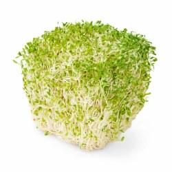 Phoenicia Alfaalfa Sprouts 6 oz