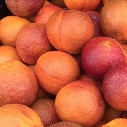 Phoenicia Blood Oranges