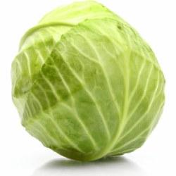 Phoenicia Cabbage Green