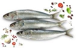 Kolan Fish