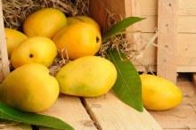 Banganapalli Mango Per LB