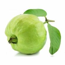 Guava Large