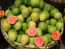 Guava Small