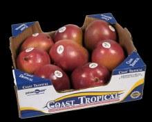 Mango Haden box