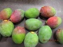 Mango Haden Each