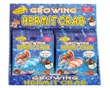 Growing Hermit Crab