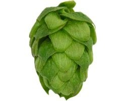 Northern Brewer 1 lb.