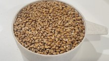 Red Wheat 1 lb.