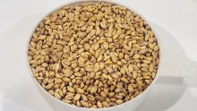 White Wheat Malt 50 lbs.