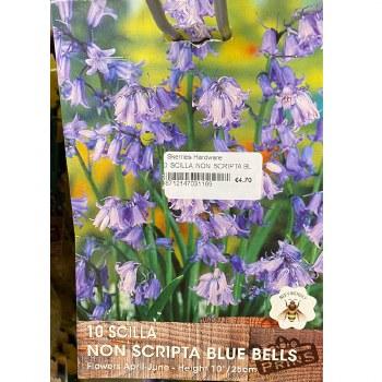 10 SCILLA NON SCRIPTA BLUE BELLS