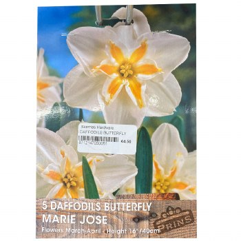 5 DAFFODILS BUTTERFLY MARIE JOSE