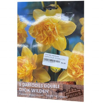 5 DAFFODILS DOUBLE DICK WILDEN