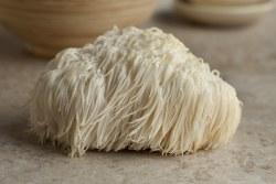 Mushroom, Lion's Mane