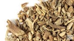 Echinacea Angustifolia Root, Organic