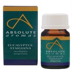 Absolute Aromas Eucalyptus Staigeriana 10ml