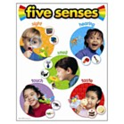 Educational Poster - Five Senses