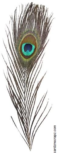 Feathers Peacock 5pk Natr
