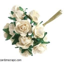 Mini Open Rose 12 Pack Cream