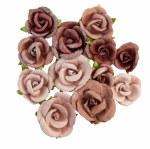 Flowers Prima Desert Sahara