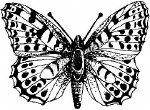 R/Stamp Butterfly #1
