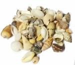 Shells Mini 50gm